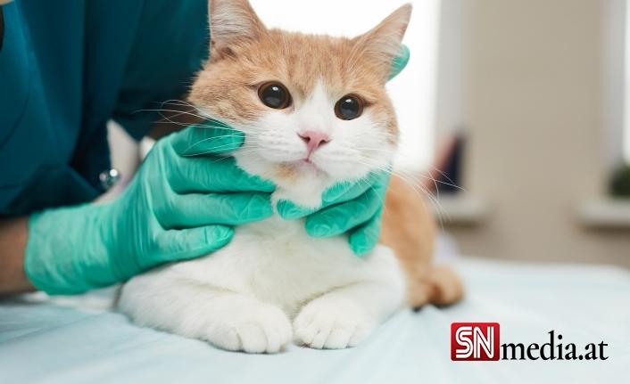 Avusturya'da bir ilk: Kedide koronavirüs tespit edildi