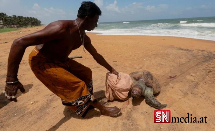 Yüzyılın en kötü çevre felaketlerinden: Onlarca yunus, balina ve kaplumbağa kıyıya vurdu
