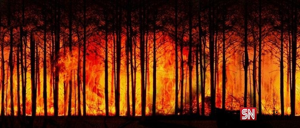 Orman yangınları dünyayı etkisi altına aldı! Avustralya, Yunanistan, İspanya, İtalya...