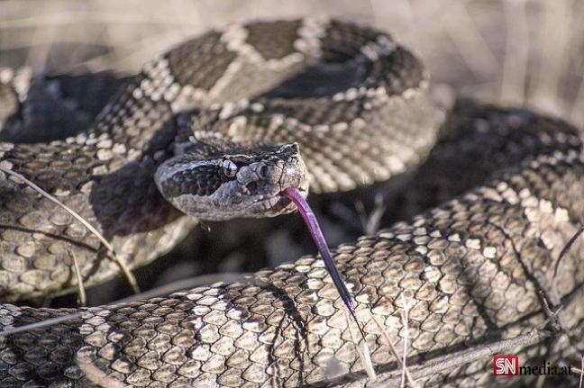 Viyana'da yılan alarmı: iki haftada altı yılan bulundu