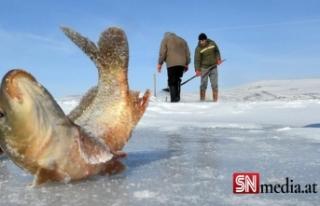Donan Çıldır Gölü'nde Eskimo usulü balık...