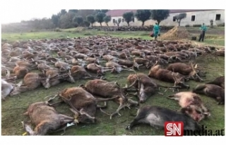 Portekiz'de katliam: 540 vahşi geyik iki günde...