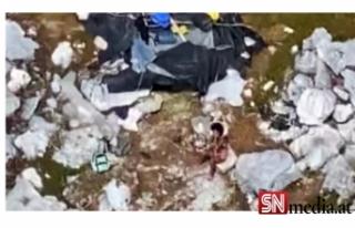 Issız adada mahsur kalan 3 kişi, 33 gün sonra kurtarıldı