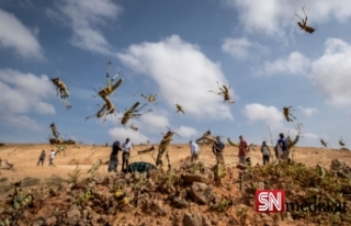 Somali, çekirge istilası nedeniyle OHAL ilan etti