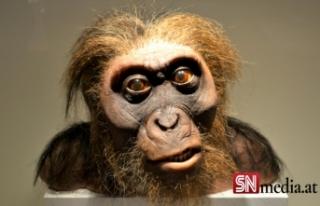 Ejderha Adam: Bilim insanları, insanın evrimine...