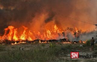 Amazon ormanlarında 14 yıl sonra en büyük kayıp:...