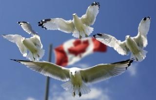 Kanada'da erken seçim kararı
