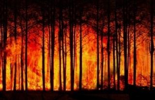 Orman yangınları dünyayı etkisi altına aldı!...
