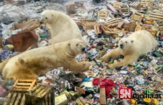 Tepki çeken karar: Kutup ayıları için vur emri