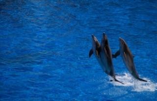 Danimarka'da katliam gibi festival: 1428 balina...