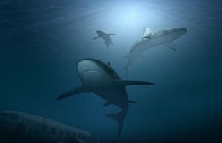 Havalimanında 3 bin 493 köpek balığı yüzgecine...