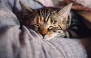 Mucize kavuşma! 10 yıldır kayıp olan kedi evine...