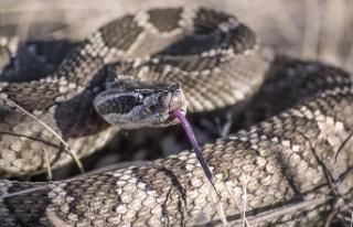 Viyana'da yılan alarmı: iki haftada altı yılan...