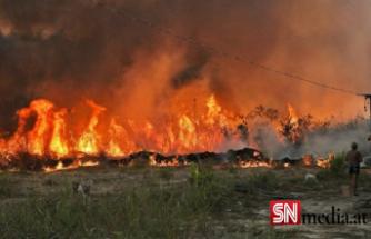 Amazon ormanlarında 14 yıl sonra en büyük kayıp: Haziran ayında rekor alan kül oldu