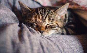 Mucize kavuşma! 10 yıldır kayıp olan kedi evine döndü