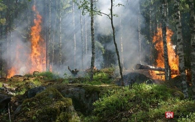 Dünya Türkiye'deki yangınları korkuyla izliyor