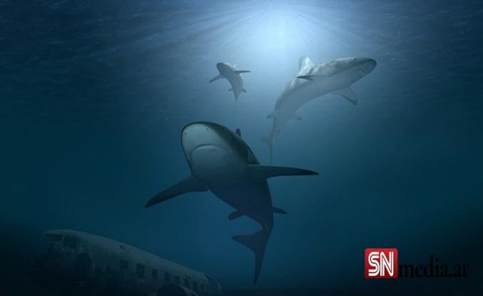 Havalimanında 3 bin 493 köpek balığı yüzgecine el konuldu