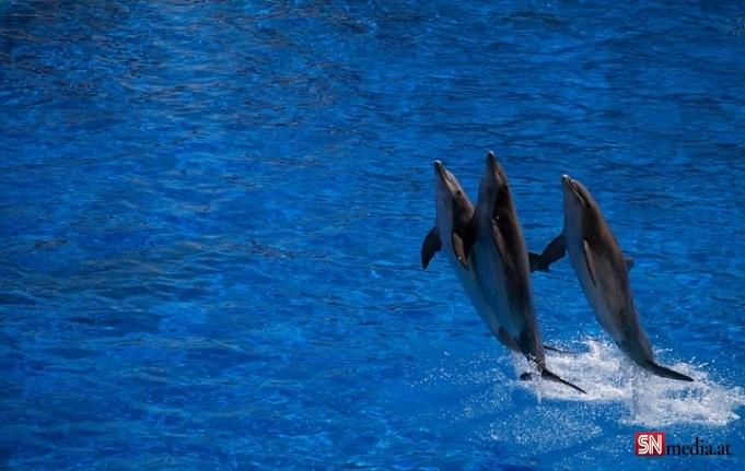 Danimarka'da katliam gibi festival: 1428 balina ve yunus öldürüldü